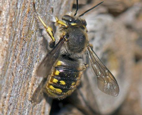Nicht nur der Honig zählt…!